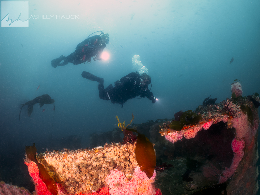 Divers alongside the bow