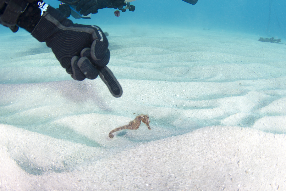 I hate this seahorse