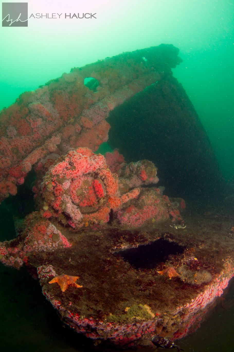 San Diego, California: Bow and kelp cutting arm of the El Rey Wreck
