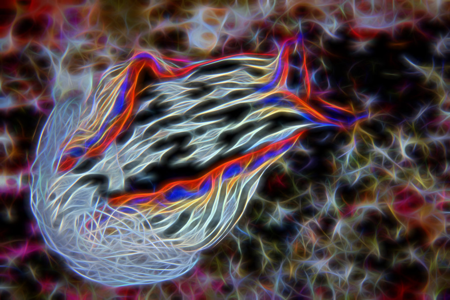 Nudibranch processed with Topaz Glow Photoshop plugin